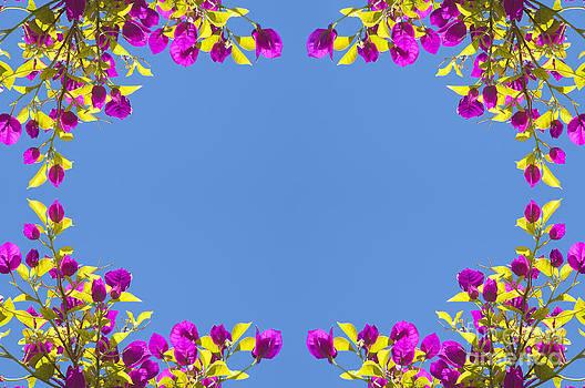 Tim Hester - Spring Flower Frame