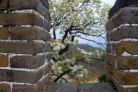 Spring Flowers at The Great Wall by Larry Moloney