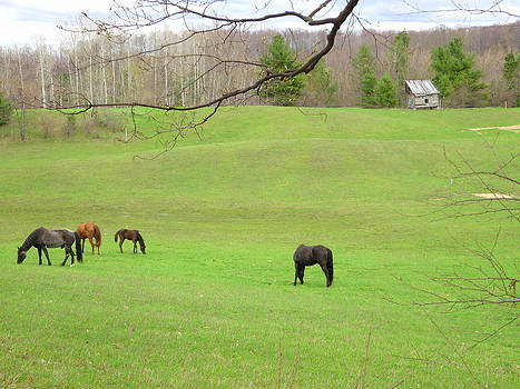 Spring Horse Pasture by Kathleen Luther