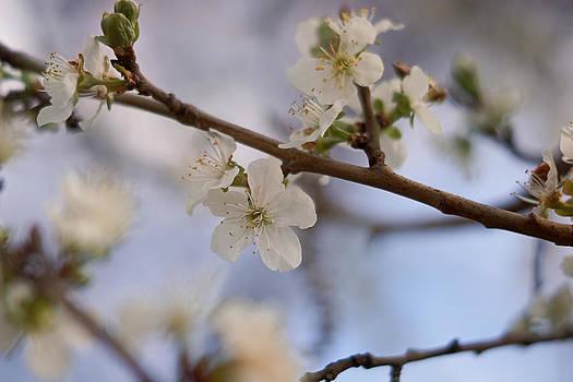 Spring in Bloom by Linda Storm