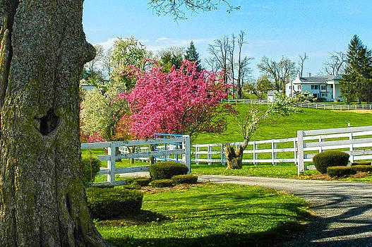 Randall Branham - Spring In Kentucky