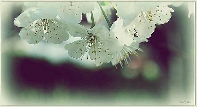 Spring in my heart by Marija Djedovic