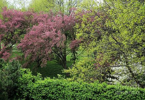 Spring in St. Louis by Theresa Willingham