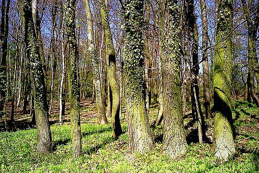 Spring in the Woods by Michael Lobisch-Delija