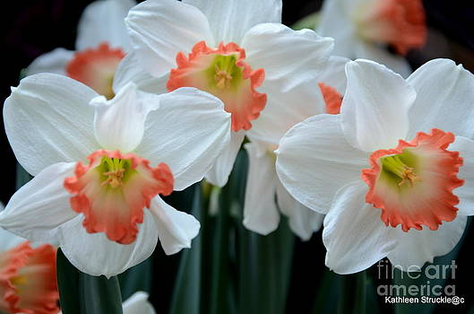 Spring Jonquils by Kathleen Struckle