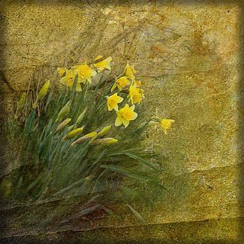 Liz  Alderdice - Spring