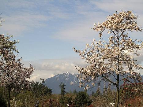 Alfred Ng - spring magnolia with mountain