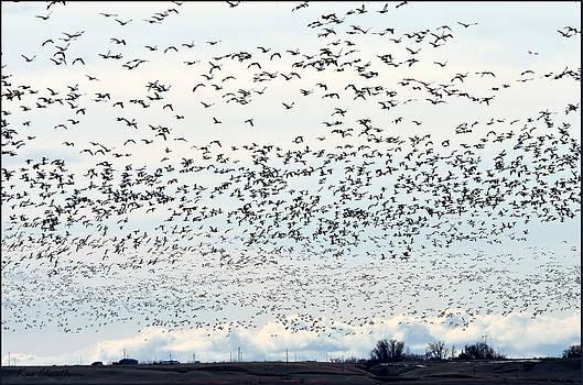 Kae Cheatham - Spring Migration #2