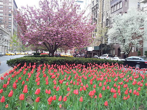 Spring on Park Ave by Theresa Crawford