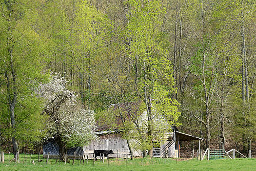Spring on the Farm by Cecile Brion