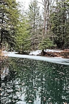 Spring pond by Gary Pavlosky