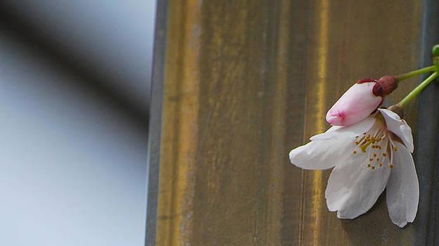 Spring Simplicity by Amee Stadler