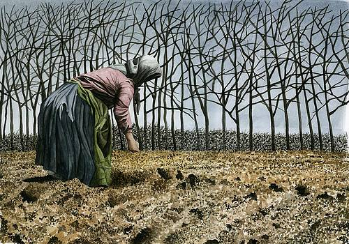 Spring Sowing by Jason Morgan