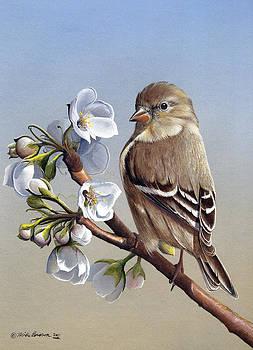 Spring Splendor by Mike Brown