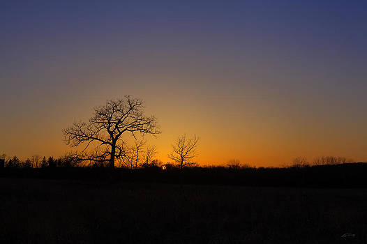 Spring Sunset Pops through Trees by Ed Cilley