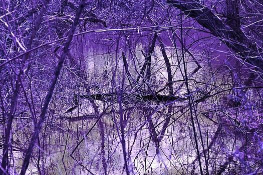 Spring Swamp by Michael Sokalski