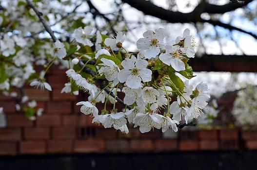 Spring Time by Ignatescu Isabela