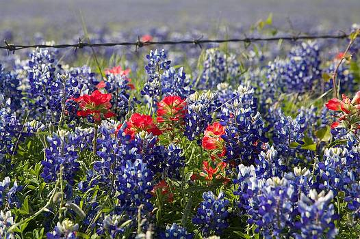 Spring Wildflowers by Dave Files
