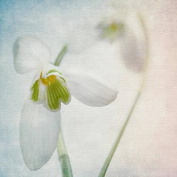 Springflower by Annie  Snel