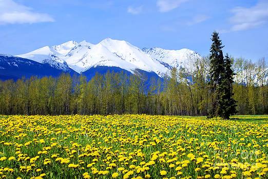Stanza Widen - Springtime Dandelions