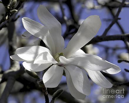 Springtime by Kimberly Nyce