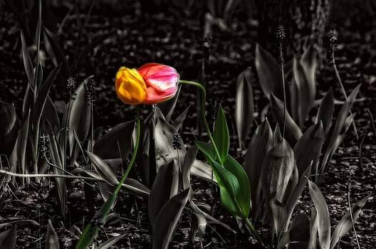 Springtime kiss by Dan Quam