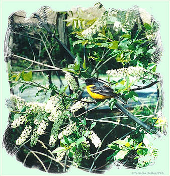 Springtime Moments- Oriole With The Cherry Blossoms by Patricia Keller