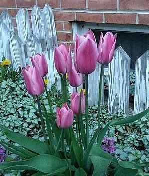 Springtime Tulips by Linda Tyson