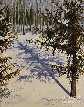 Spruce Shadows by Helen Shideler