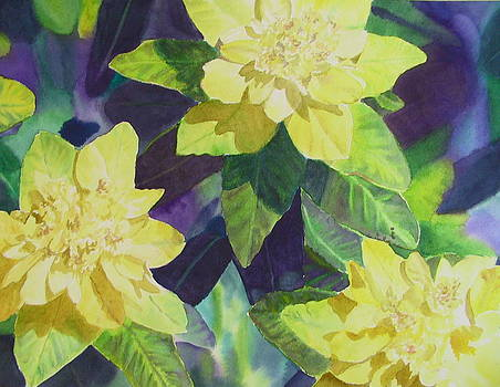 Spurge of Yellow by Kathy Dolan