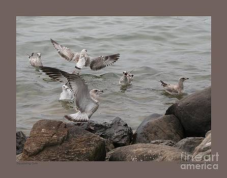 Squabbling Gulls by Patricia Overmoyer