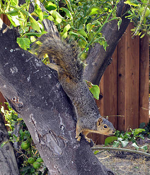 Cindy Nunn - Squirrel 3