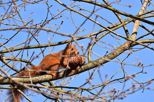 Bishopston Fine Art - Squirrel in Tree