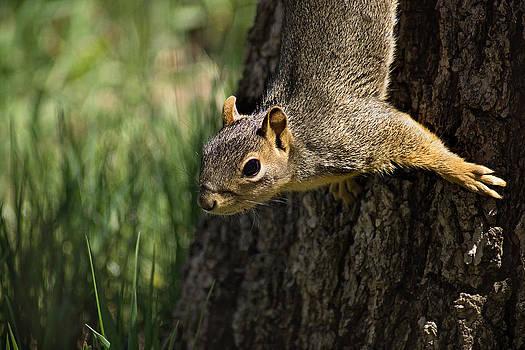 Squirrel by Linda Storm