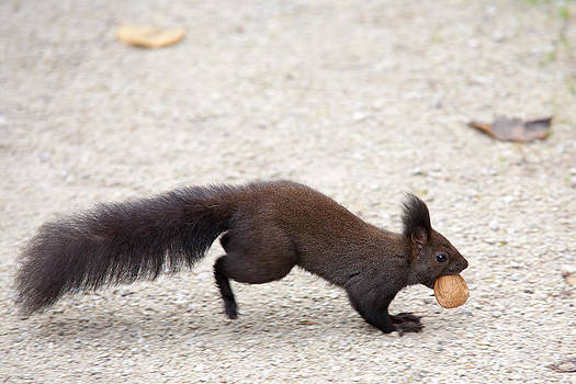 Squirrel by Nina Peterka