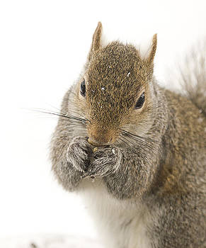 Squirrel Portrait by Marty Maynard