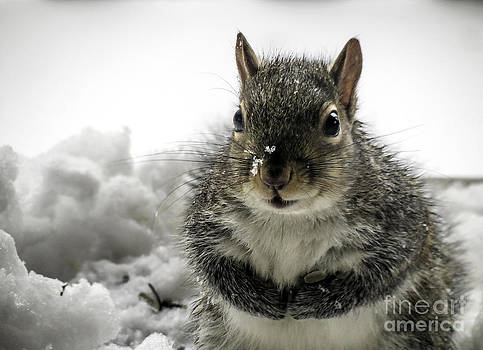 Squirrel Praying For Food by Crissy Anderson