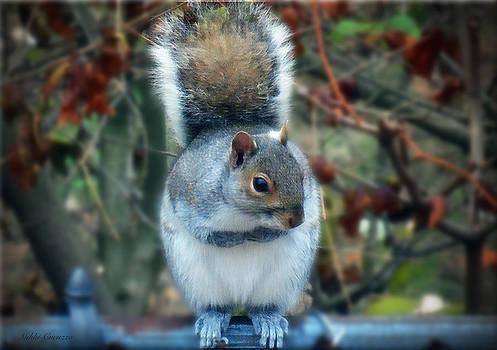 Squirrel Series 3 by Mikki Cucuzzo