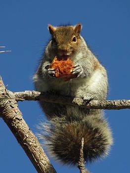 Alfred Ng - squirrel