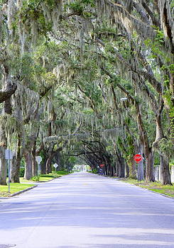 Laurie Perry - St. Augustine Road