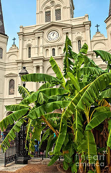 Kathleen K Parker - St. Louis Cathedral and Banana Trees New Orleans
