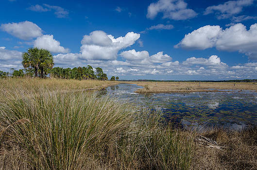 St. Marks Marsh by Don L Williams