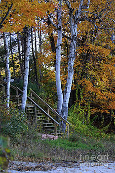 Stairway to Fall by Kathy DesJardins