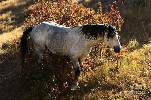 Adam Jewell - Stallion Of The Badlands