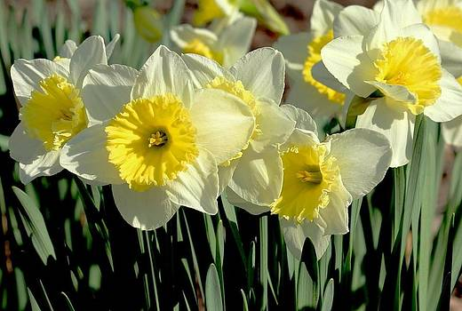 Rosanne Jordan - Stand Up for Springtime