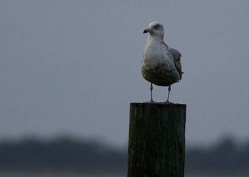 Standing Guard by Paula Tohline Calhoun