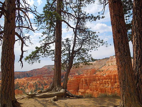 Standing Tall on the Edge of Bryce Canyon by Donna Jackson
