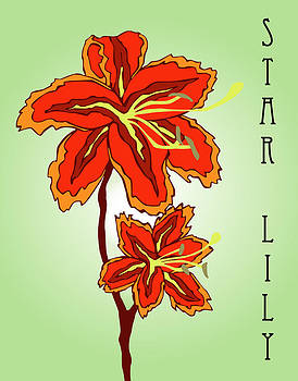 Star Lilly by Patrick Collins