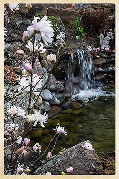 Mick Anderson - Star Magnolia and Flowing Water