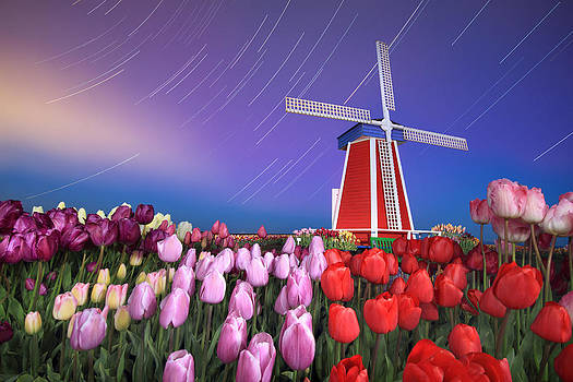 Star trails windmill and tulips by William Lee